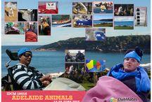 IDCM1616 Adelaide Animals / IDCM1616 Adelaide Animals ( 10 Days/ 9 Nights )