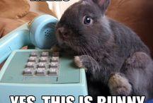 i love bunnies / by Joelle Johnson