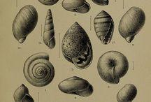 Imagebank: nature