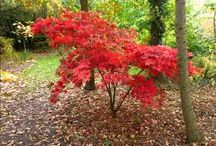 Basil Spence: landscaping