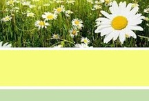 dream colours yellow-green