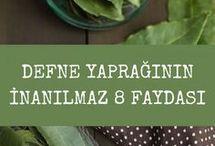 defne yapragi