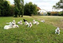 Youky's Gift / le foto dei nostri cani :)