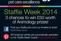 #staffieweek / This week we are celebrating Staffies! Join us on Facebook @ www.facebook.com/animology and your entry will be added to this board! #dogs #staffieweek #staffies @animology *UK Only*