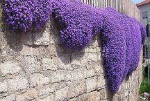 muro canteiro