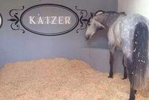 horse home