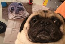 Pugs / by Janet