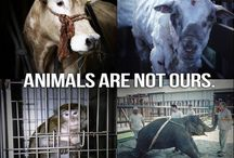 Animals are Not Ours / Not our to eat , exploit, harm or abuse
