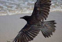 Kuş sanat