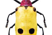 bugs deco