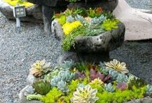 Succulent Gardens and ideas