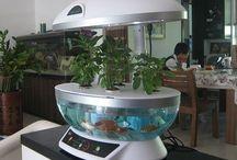 akvaario+kasvit