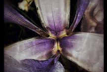 My flowers / My flower pics