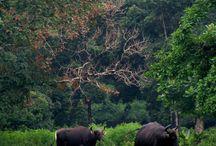 Your Next Dream Destination: INDONESIA