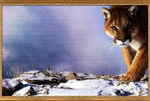 Természeti táj képek / Itt találhatók természeti táj képek..méghozzá sok fajta..