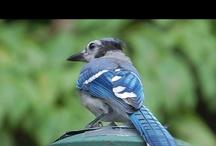 Birds By Jan