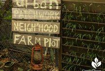 Urban farms / Urban farms, microgrowers and community gardens