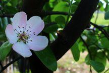 Flowers / My photos of flowers