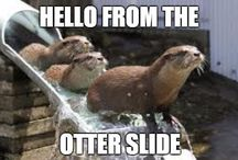 On the otter side