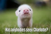 cute lil piggy