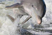 Delfin djur