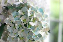 paper flowers / flori hartie