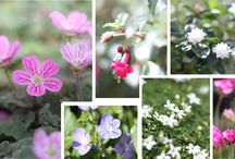 Mini Gardens / by Tina Lackey-Tillery