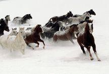 Horses / by Mitra Forsha