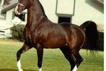 Sublime Equine / Horses / by Hanna Garner