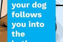 hondengebaren