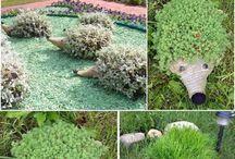 zahrada a pestovani / zahrada a pestovani