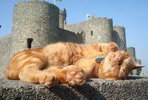 tom cat cat