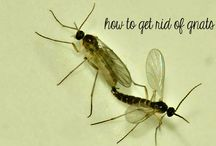 How To Get Rid Of Gnats: Home Remedies For You / How To Get Rid Of Gnats: Home Remedies For You
