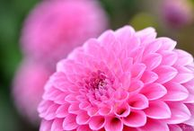 Garden Love / by Lindsey Gajewski