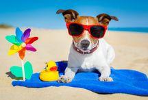 Un'estate bestiale! / Immagini estive dal mondo di cani e gatti