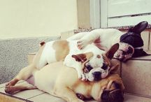 {cute puppies}