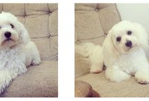 Gorgeous George Before and After