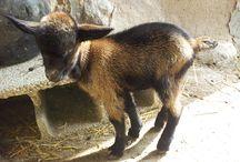 Los animales de la casa rural / Los animales que habitan en Casa Martintxorena