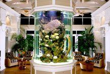 Aquarium Mania / Unique aquarium features and installations