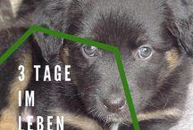 Fun, Zitate und Sprüche rund um den Hund / Lustiges ⎮ Hunde ⎮ Hund ⎮ Nachdenkliches ⎮ Wahres ⎮ Zitate ⎮ Sprüche