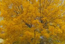 Autumn in Cotroceni quarter