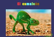 proyecte camaleons