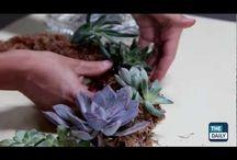 Succulente / Creative