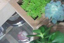 """Saksı ve Minik Bahçe Tasarımları / designs of """"the littlest things"""" happiness, plants, love - saksı, sukkulent, kaktüs, tasarım, bitki tasarım, bitki, iç mekan bitkileri, saksıcı,peyzaj, bahçe, succulent, plant design"""