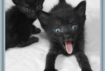 Black Kittehs / by J. Chrissy Sawka Johnson