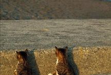 Cats / by Belle Marfori