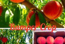 Farm Life / by DrewryFarm And orchards