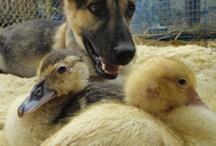 rescue animals to sponser