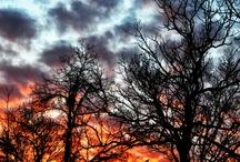 Sunsets / by Natasha Bruner