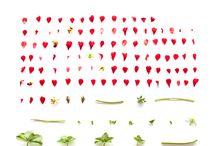 DECONSTRUCTING FLORA - SARAH BLYTHE / Deconstructing Flora 2011 collection - Photographic floral series - Sarah Blythe
